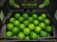 lime huniver 1_0406